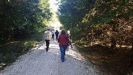 Bei einem schönen Spaziergang kann man den Wald vollkommen genießen.