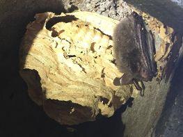 Sogar eine seltene und geschützte Bechsteinfledermaus gab´s zu sehen!